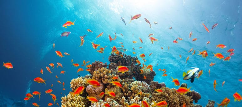 red sea diving on egypt tour