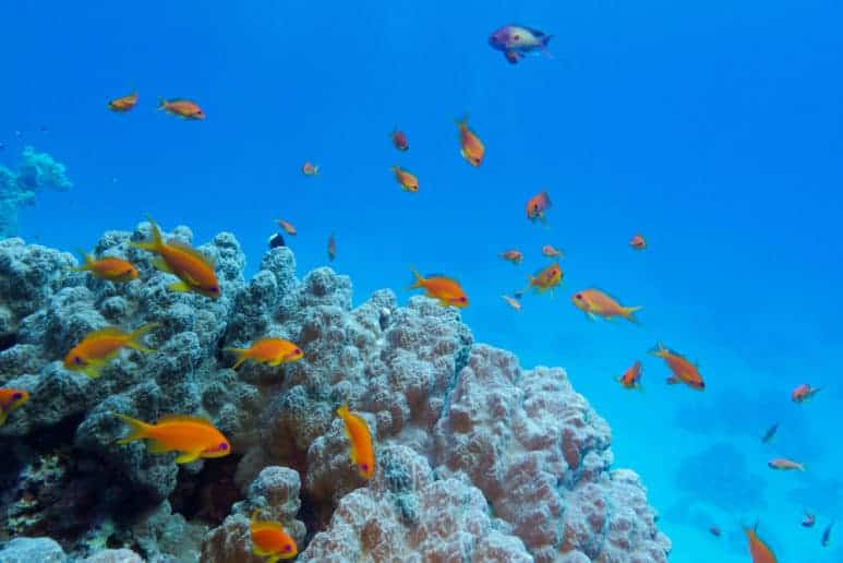Colorful Coral Reef with Hard Coral and Exotic Fishes at the Bottom of Red Sea, Sharm El Shaikh, Egypt