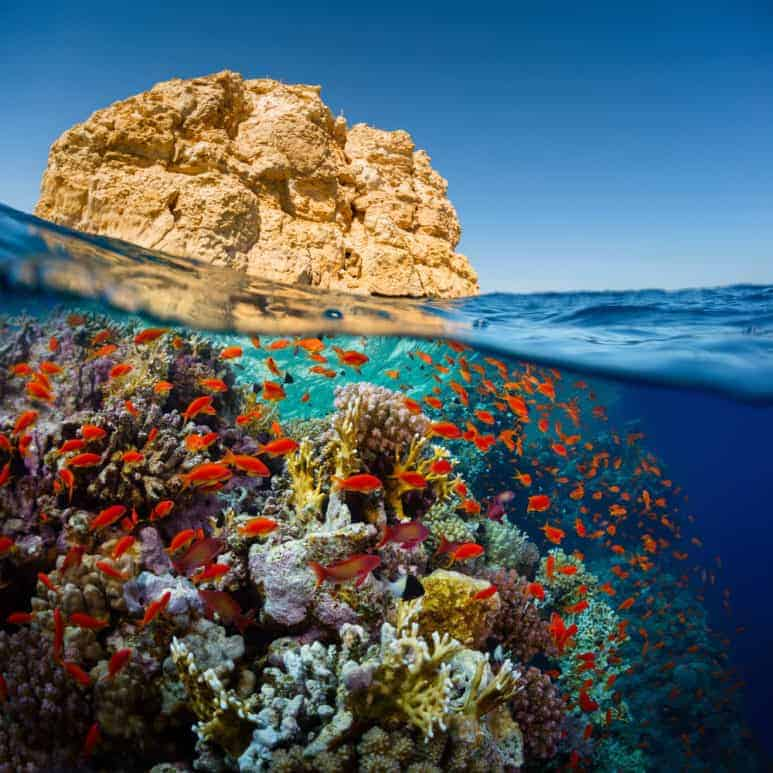 The Beauty of Egyptian Red Sea