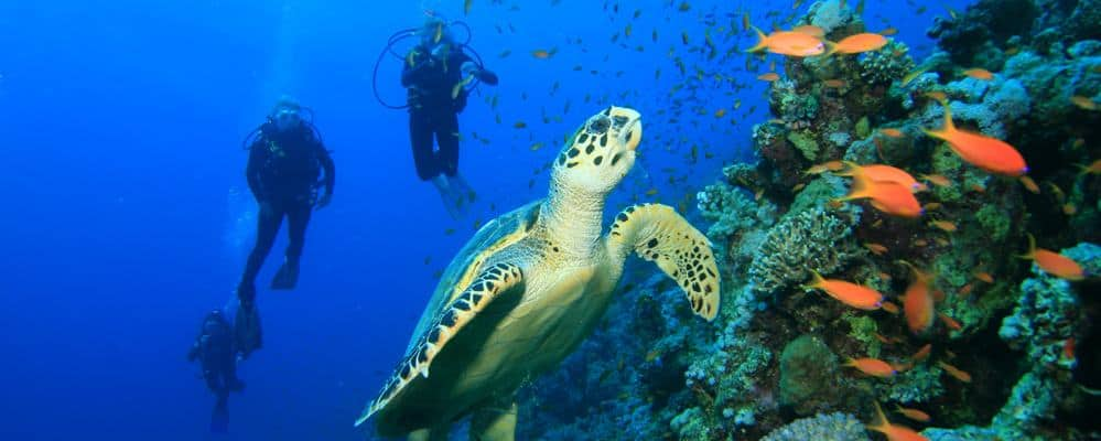 Marsa Allam is one of the Top Scuba Diving Spots in Egypt's Red Sea