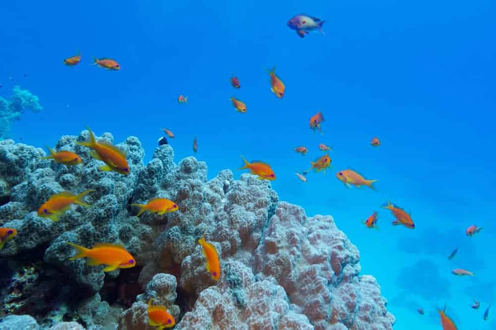 Dahab is one of the Top Scuba Diving Spots in Egypt's Red Sea